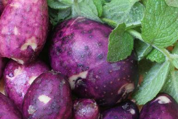 Purple potatoes rule!