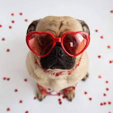 July 24th Pet Appreciation Day/Dog Day